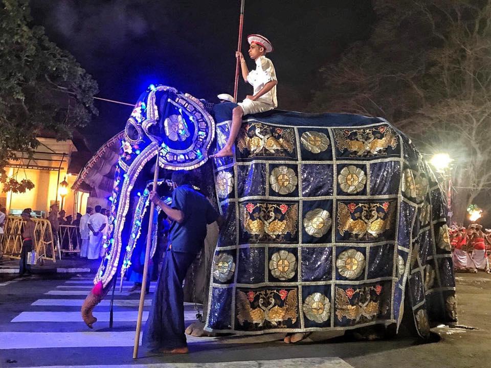 Sri Lanka, l'elefantessa Tikiiri
