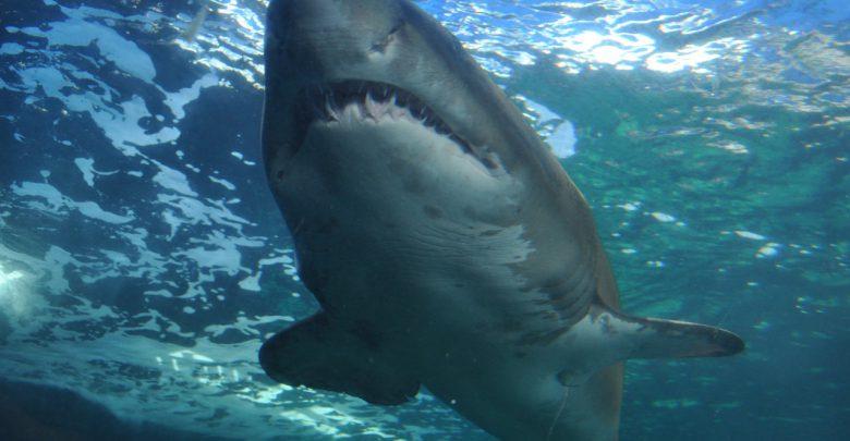 Lo squalo colpisce tre volte in 24 ore
