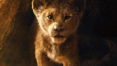"""""""Il Re Leone"""": il primo trailer del nuovo film. Immagine Disney"""