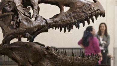 É italiano il più antico dinosauro carnivoro di grandi dimensioni