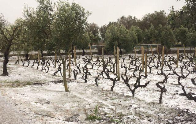 Neve in Salento. Foto ANSA
