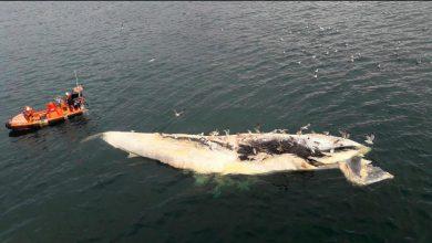 Balene: la caccia danneggia i nativi dell'Alaska