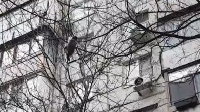 Un gatto precipita da un albero: l'incredibile salvataggio