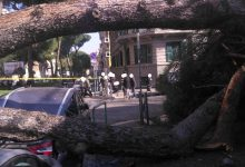 Cade albero Roma