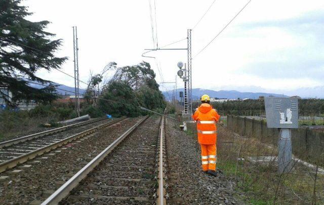Rogo e rami sui binari treni Calabria e Sicilia
