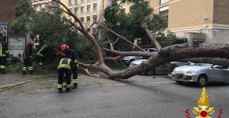 roma alberi