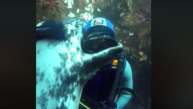 Oceano, incontro tra sub e foca