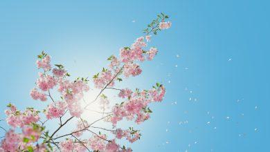 previsioni meteo sole primavera