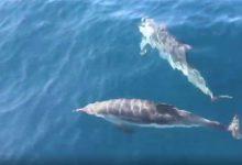 delfini corsica