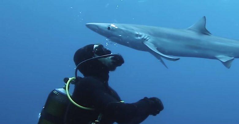 squalo bacia sub