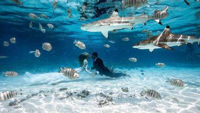 matrimonio tra gli squali