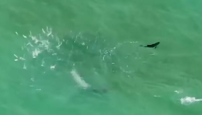 delfini florida video
