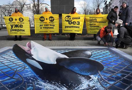 """Balene e orche nel """"lager"""" russo, il proprietario rifiuta di liberarle"""