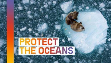 Greenpeace, proteggi l'oceano