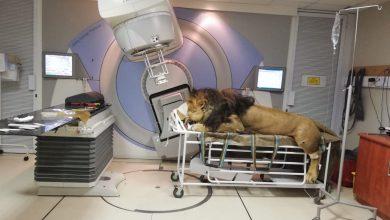 leone ospedale sudafrica