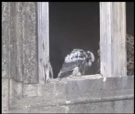 Napoli nido di falchi Maschio Angioino