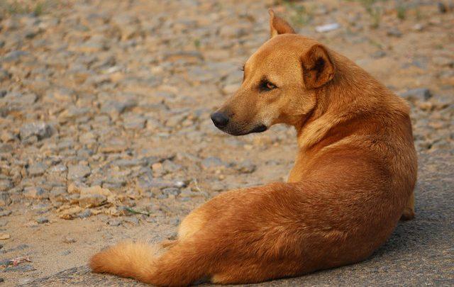 pesaro cane multa