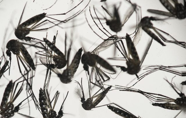 brasile dengue 2019