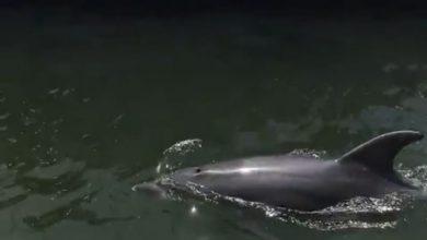 delfini nel porto di Cagliari