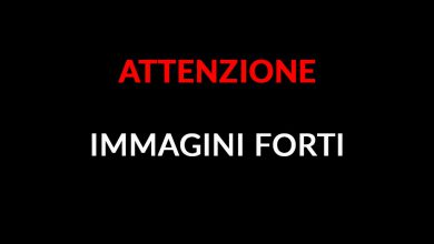 IMMAGINI FORTI video cane