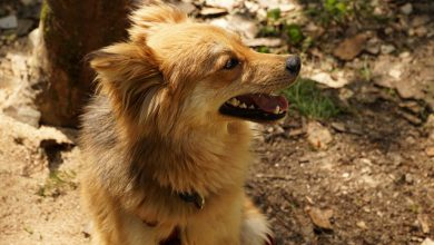 cane escursionista trentino