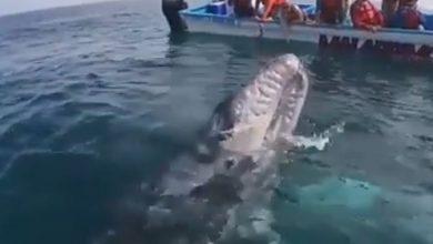 Messico balena