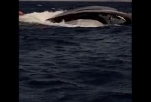 Yacht affonda in Sardegna