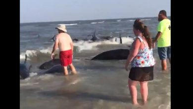 balene spiaggiate georgia
