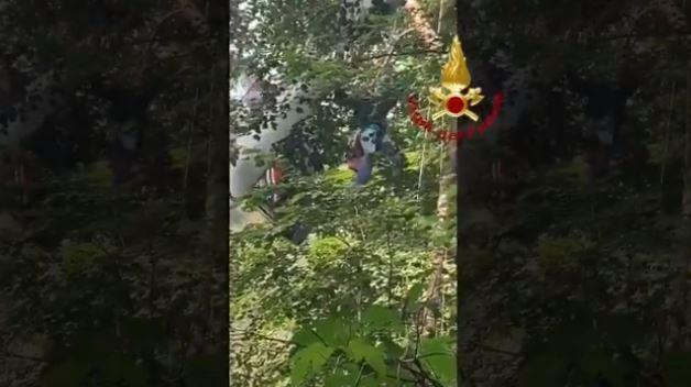 cuneo aliante albero video