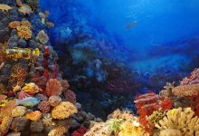 barriere coralline golfo messico