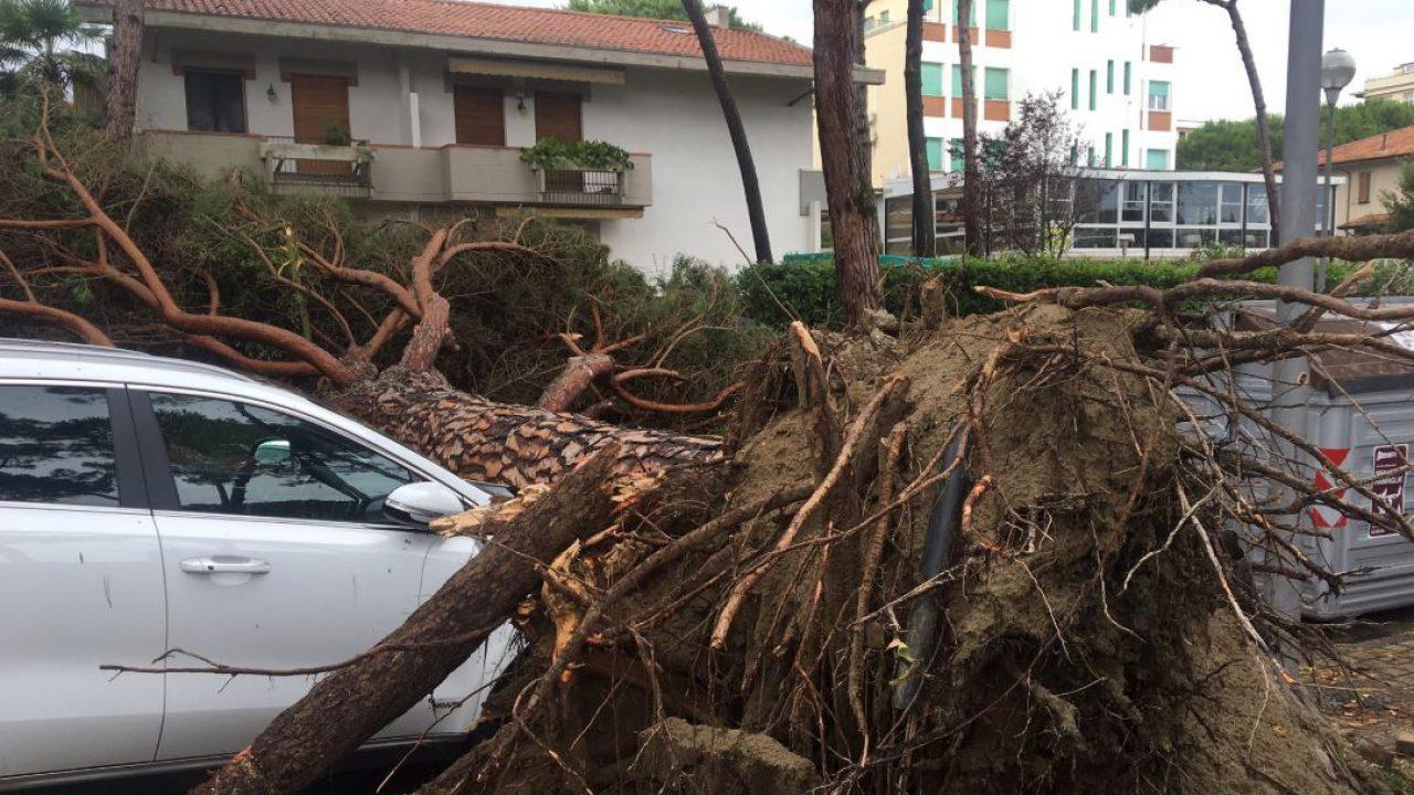 Romagna colpita dal maltempo: un ferito, decine di alberi ...