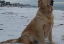 Genova, ponte morandi, cani