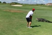 coccodrillo golf video
