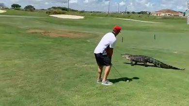 coccodrillo golf video