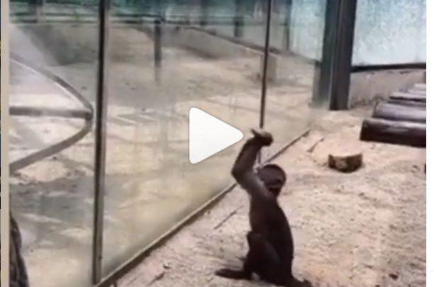 Cina scimmia zoo