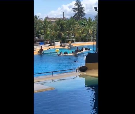 Tenerife mamma orca