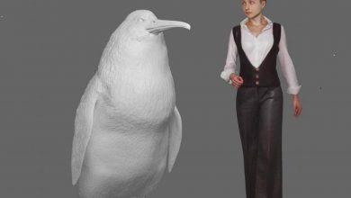 pinguini giganti, la scoperta degli scienziati