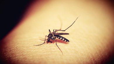 zanzare virus eee