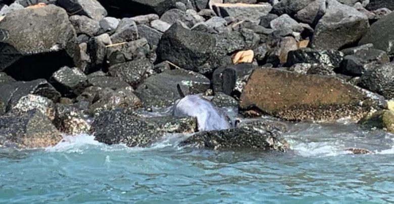 ostia delfino