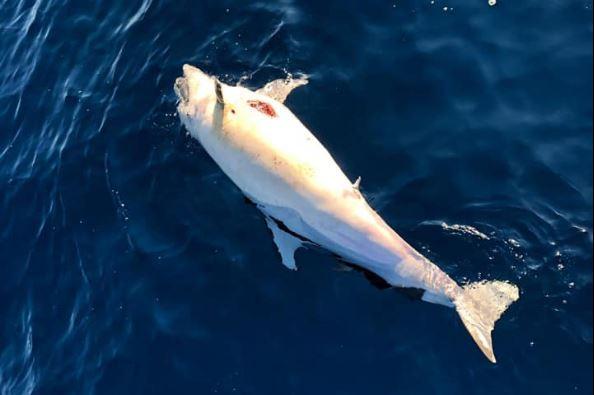 toscana delfini morti