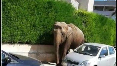 elefante in strada video