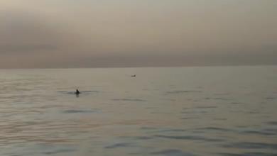 Andrano delfini