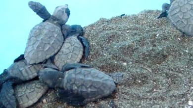 Sorrento tartarughe