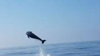 delfini video