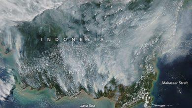 incendi borneo olio palma