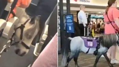 pony aereo video