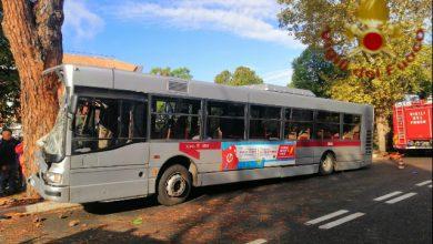 Autobus Roma albero