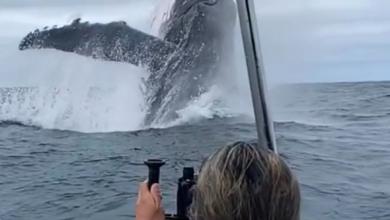 Oceano Pacifico balena