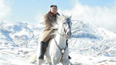 kim jong un cavallo foto