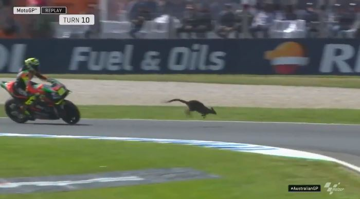 MotoGP canguro Iannone
